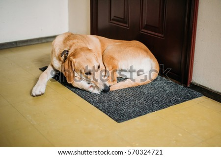Dog Eating Carpet Sick