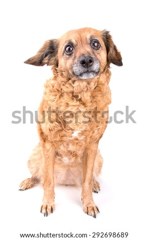 Red dog on white background
