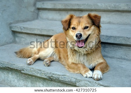 Red dog welcome home on blue stairs                                - stock photo