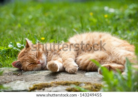 Red domestic cat lying in a meadow - stock photo
