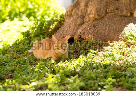 Red domestic cat lying in a meadow. sunny day