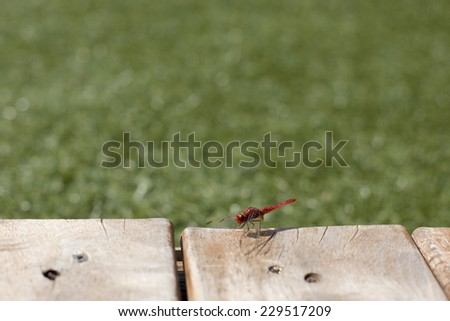 Red dragonfly on a wood floor