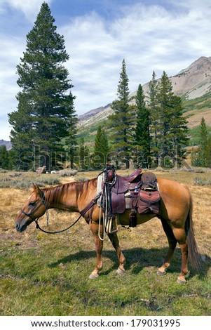 Red Dun mountain horse under saddle, saddle bags, rain slicker, Summer, Emigrant Wilderness, Stanislaus National Forest, California - stock photo
