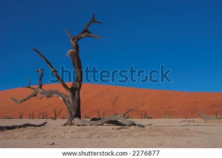 """Red dunes and dead trees in """"Dooie vlei"""", Namibia - stock photo"""