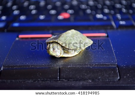 Red-eared slider turtle - stock photo