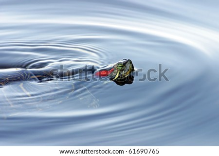 Red Eared Turtle in Water - stock photo