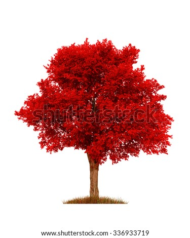 red elm tree, isolated over white - stock photo