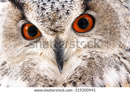 Red-eyed eagle-owl face close-up - stock photo