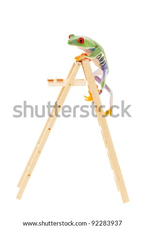Red-eyed tree frog climbing to the top of the ladder.  Conceptual image illustrating success, promotion, advancement.  Also pet shop or zoo under construction or renovation.  Shot on white background. - stock photo