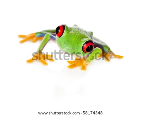 Red eyed tree frog isolated on white - stock photo