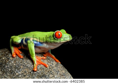 red-eyed tree frog sitting on a rock, closeup isolated on black - stock photo
