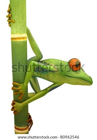 Red eyed treefrog on bamboo isolated over white - stock photo