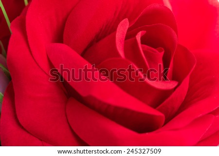 Red Fabric Rose flower  artificial flowers on colorful background - stock photo