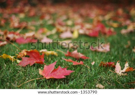 Red Fall Leaves on Green Grass (focus on foreground leaves, horizontal orientation) - stock photo
