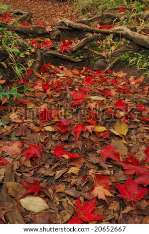Red fallen leaves - stock photo