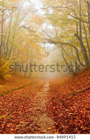 red fallen leaves in a autumn forest - stock photo
