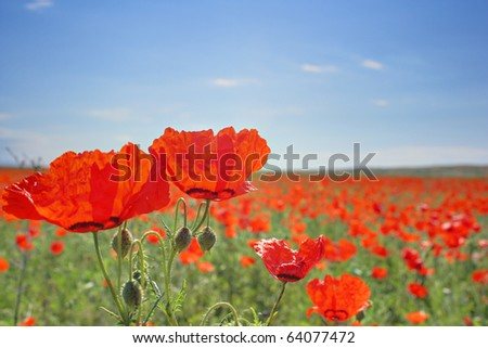 Red field - stock photo