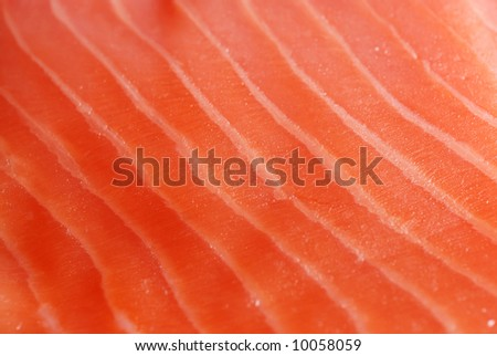 Red fish background - stock photo