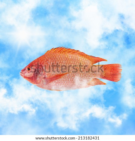 Red fish in the clouds flying south - stock photo
