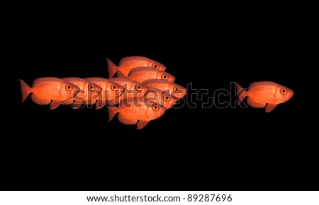 Red fish - isolated on black background