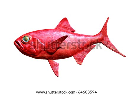 Red fish Isolated on white - stock photo