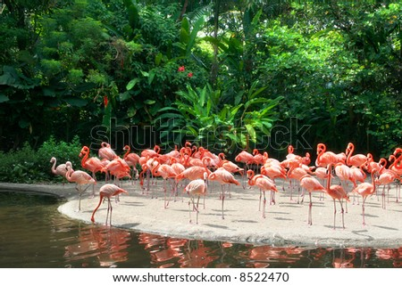 Red Flamingos - stock photo