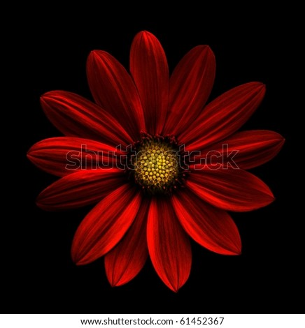 Red flower abstract - stock photo