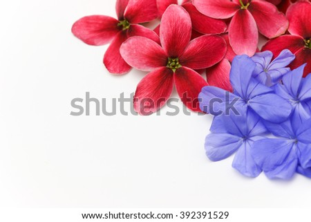 Red flower and Purple flower copy space on white background. - stock photo
