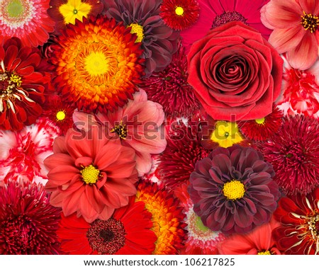 Red Flower Background. Selection of Various Isolated Red Flowers. Set of  Dahlia, Gerbera, Daisy, Carnation, Rose, Zinnia Flowers - stock photo