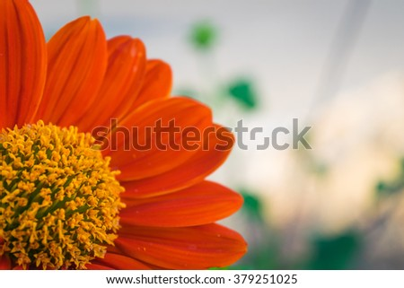 Red flower blossom. - stock photo