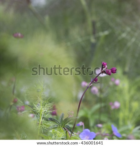Red Flower buds, isolated against green - stock photo