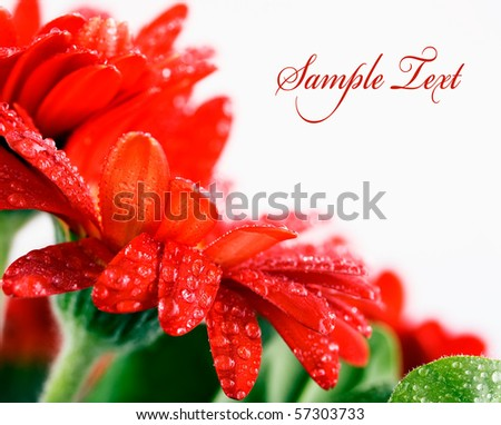red flower card with space for text - stock photo