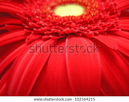 Red flower close-up on the screen without the background - stock photo