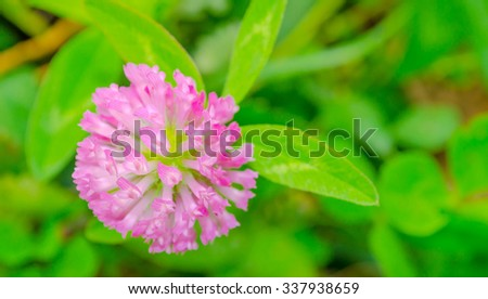 red flower clovers on green background - stock photo