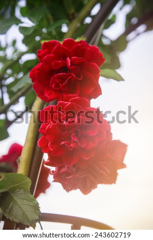red flower flowering buds of green leaves - stock photo