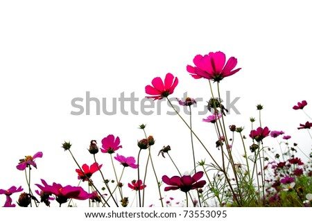red flower (Forest of Flowers ) - stock photo