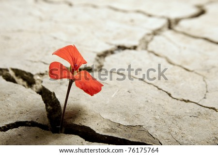 red flower growing out of cracks in the earth - stock photo