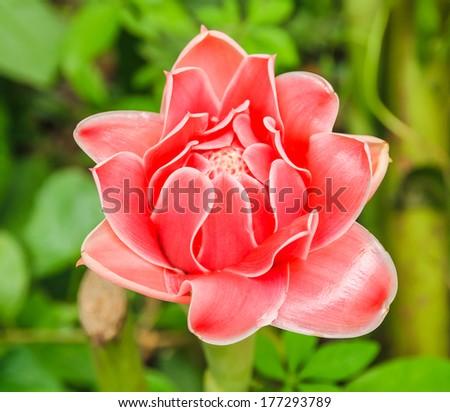 Red flower in green field - stock photo