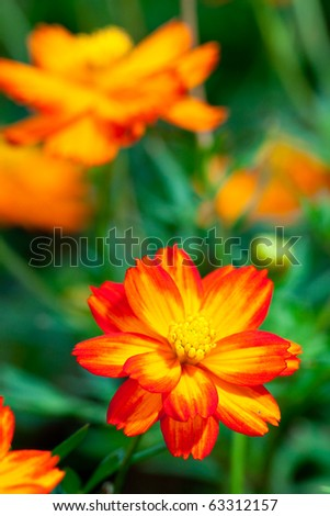 red flower is blooming with grassy in macro shot - stock photo