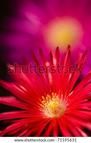 Red flower macro - stock photo
