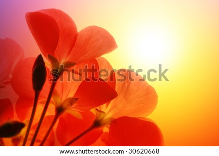 Red flower macro over white background - stock photo
