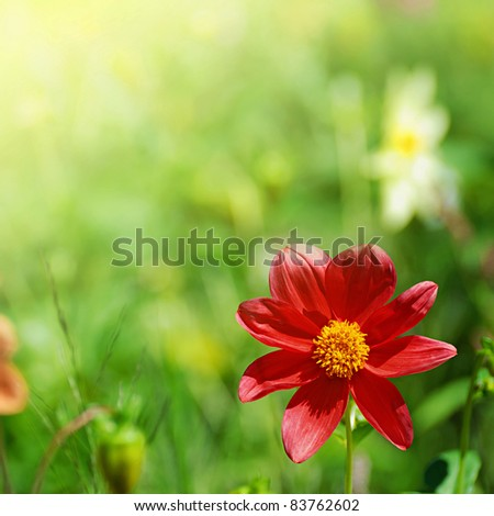 red flower on green blurred background in sunlight - stock photo