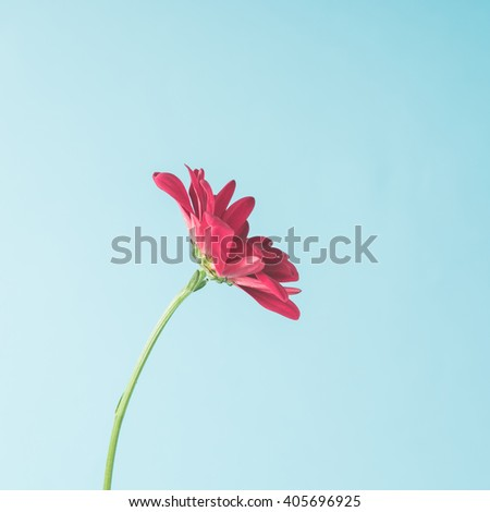 Red flower on sky background. Minimal concept. - stock photo