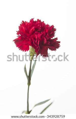 Red flower on white background.