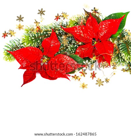 Red flower poinsettia with christmas tree branches decoration on white background