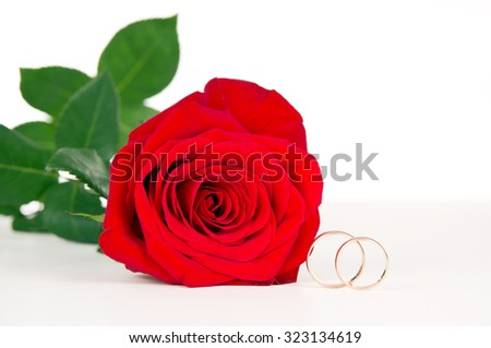 red flower rose and gold wedding rings - stock photo