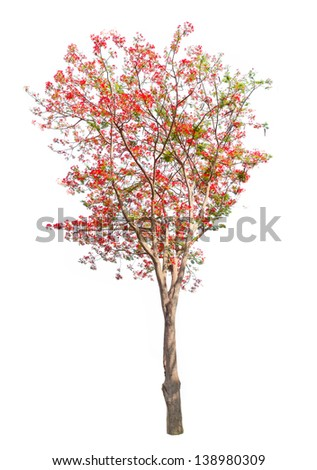 Red flower tree isolated on white background - stock photo