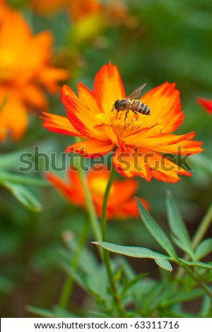 red flower with bee is working for food in macro shot - stock photo