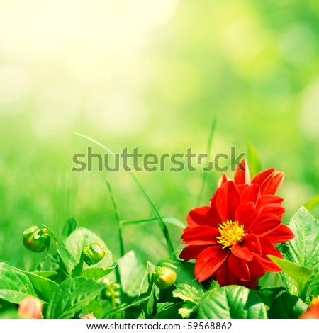 red flower with green buds on blurred background - stock photo