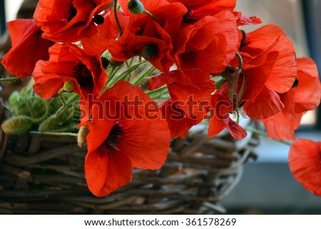 Red flowers and buds of poppies lie in a wicker basket
